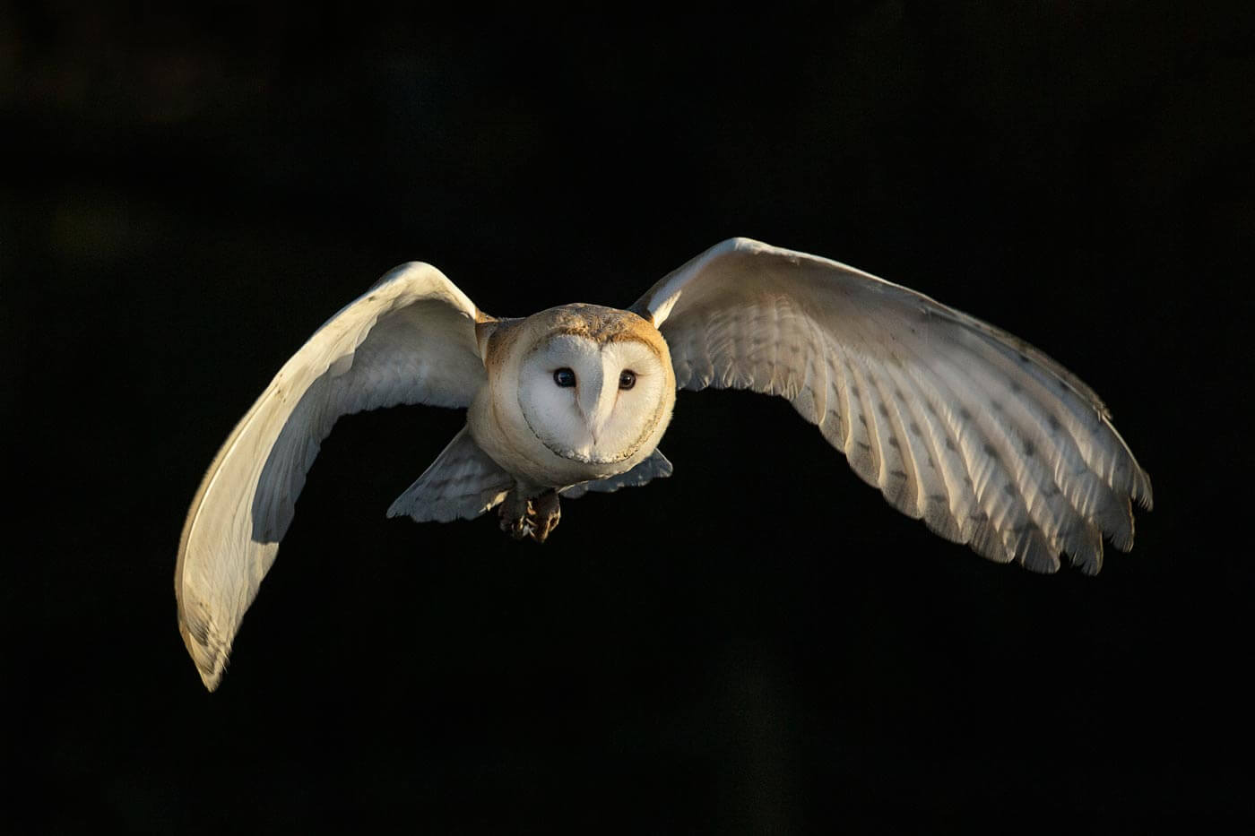3D Printing Replicates The Silent Flight Of Owls For Next Gen Aircraft