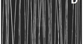 Microscopy picture of biofunctionalized aligned silk fibers showing their morphology when electrospun at 10 m/s (speed of the rotating wheel, scale bar: 5 µm).