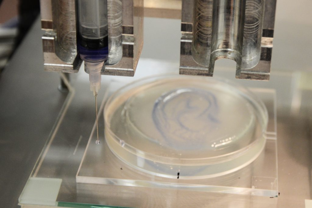 An ear vessel network written into a gel bed. Photo via IRNAS