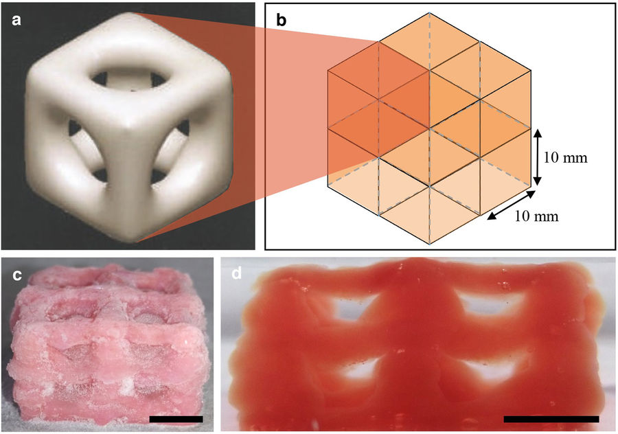 Schematic structure of the 3D printed scaffold (a, b) and the frozen (c) thawed (d) result. Image via Scientific Reports