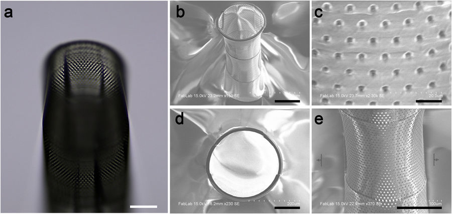 SEM images of the two-photon 3D printed Biocages. Image via Scientific Reports