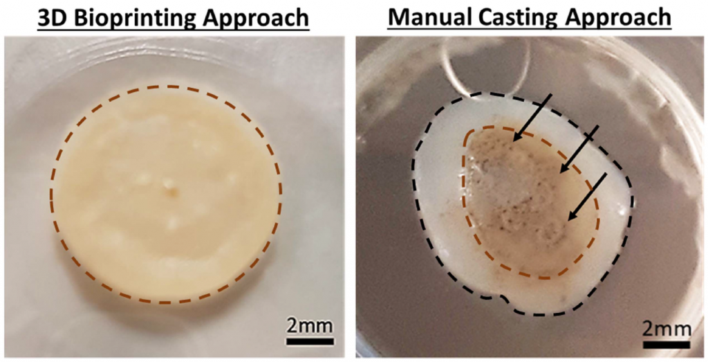 3D bioprinted sample with pigmentation, and varied pigmentation of a manually cast sample. The red line on each photo shows where pigmentation ends. Image via Biofabrication journal.