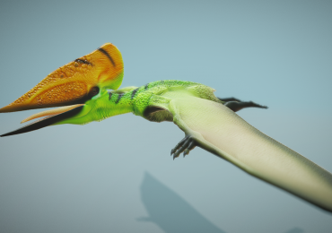 Tupuxuara Leonardii Flight Cycle 3D model on Sketchfab. Image via Sketchfab.