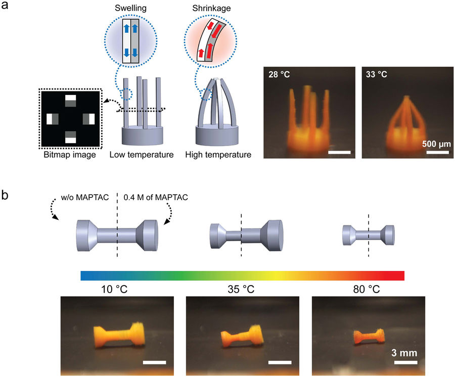 Parts of the 4D printed models can tuned to transform rather than the whole object. Image via Scientific Reports