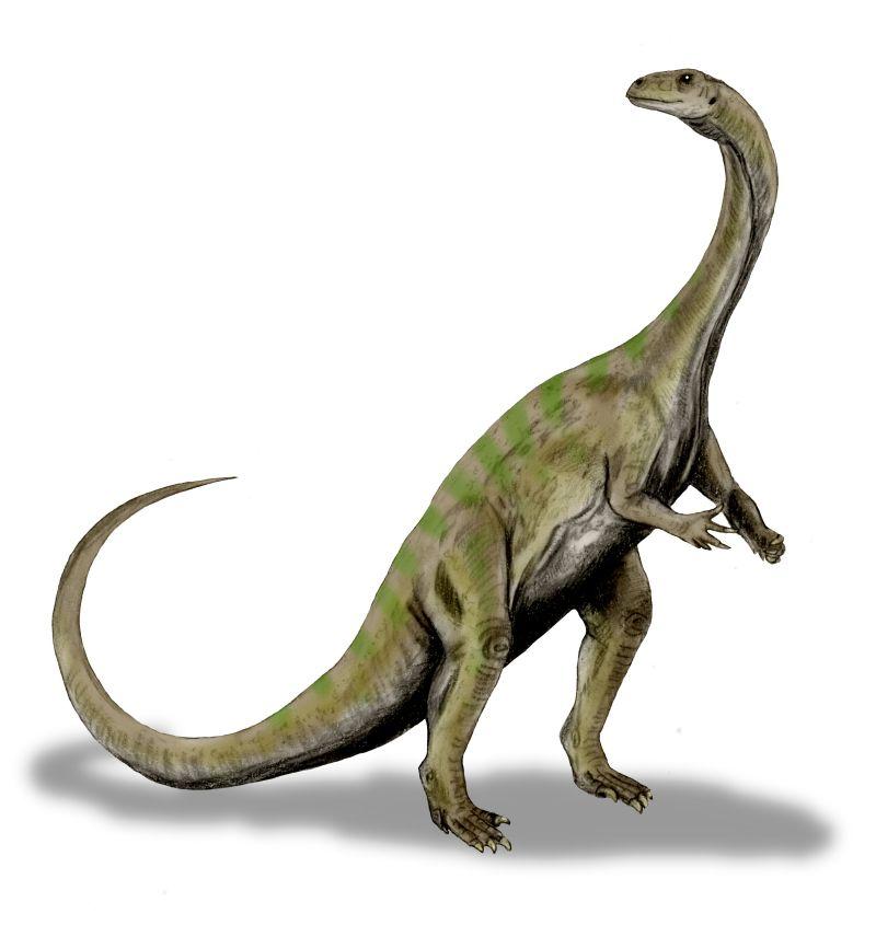 Massospondylus Carinatus on two feet. Photo via Wikimedia.