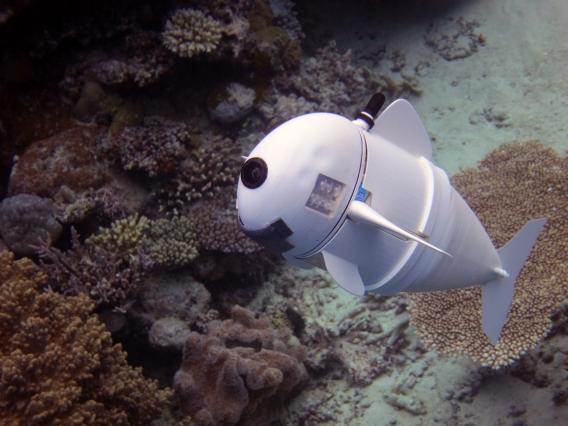 CSAIL's Soft Robotic Fish, SoFi. Photo via MIT CSAIL..