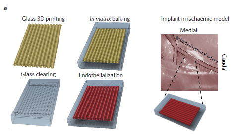The structure of the NIBIB study's most successful vascular chip design. Image via nature biomedical engineering