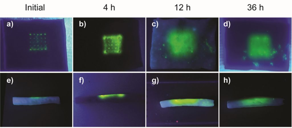 Images show that a test dye implanted by the etched microneedle array remains viable after 36 hours. Image via ChemRxiv