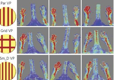 Gradual regrowth of blood vessels after the implant of the study's' scaffolds. Image via nature biomedical engineering