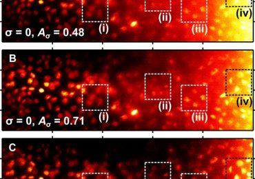 Maximum intensity projections of Airy Light-Sheet Microscopy images. Image via Science Advances