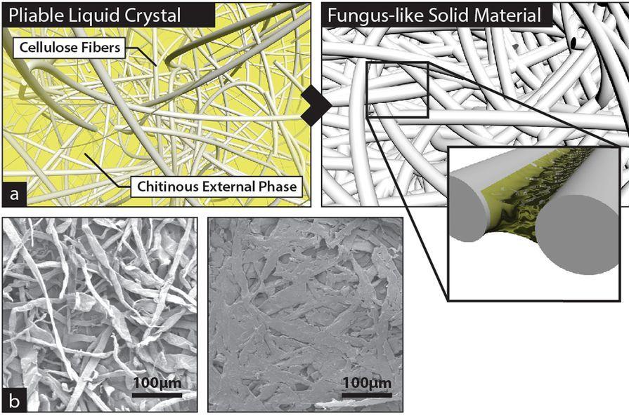 FLAM cellulose/chitin composition. Image via Scientific Reports