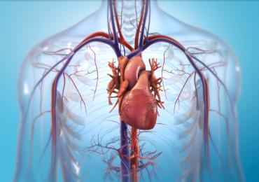 Human heart artwork. Image via BIOLIFE4D