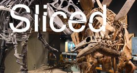 Sliced logo over a T-Rex and Stegosaurus at the Denver Museum of Nature & Science. Original photo via the Denver Museum of Nature & Science