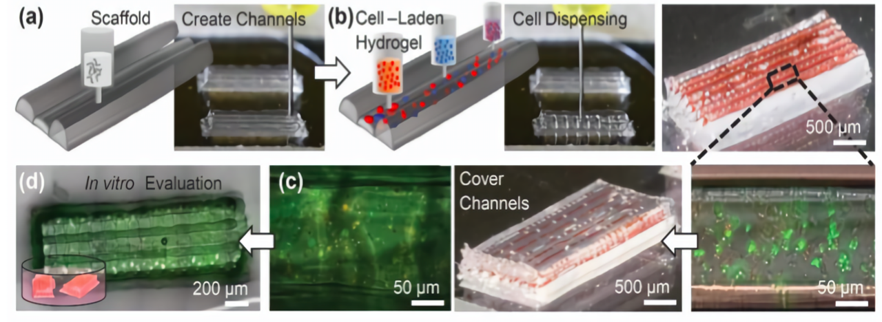 3D printed cell scaffold process