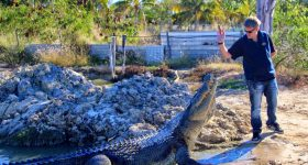 Featured image shows a crocodile being fed at the Koorana Crocodile Farm. Photo via Eat, drink+beKerry