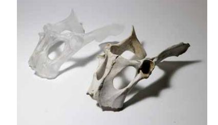 3D printed cast glass replica and original deer pelvis bone. Photo via Tobias Klein.