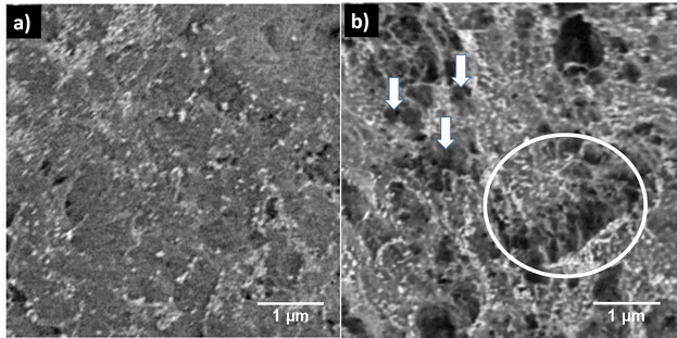 The morphological surface changes of the plasma‐exposed PA12 can be observed in the SEM image Figure b. The nontreated Pa12 is seen in Figure A. Image via Plasma Processes and Polymers, Volume 15.