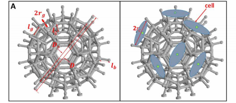 The structural design of the microrobot before and after cell seeding. Image via Science Robotics/City University of Hong Kong.