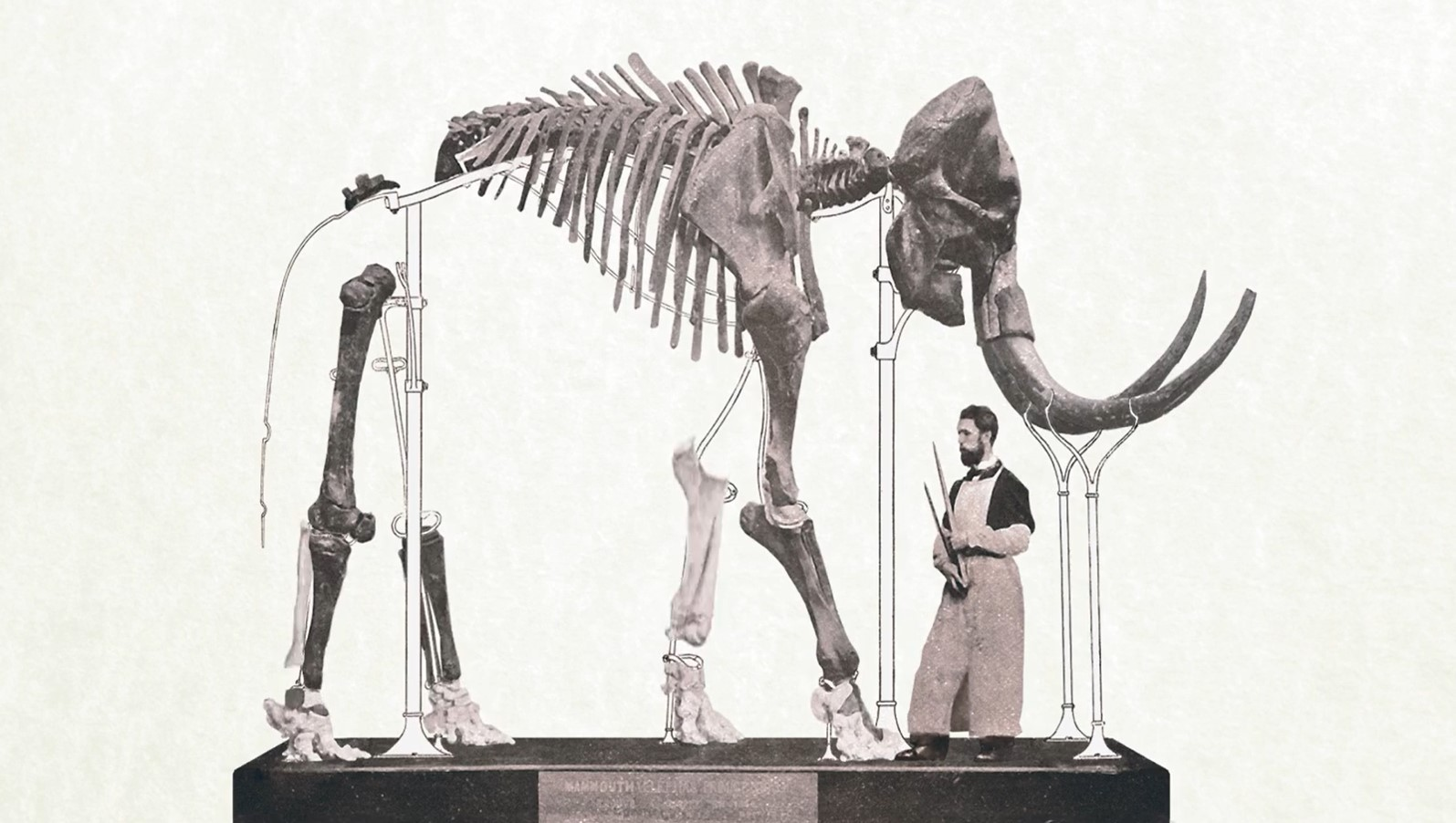 The original Lier mammoth at the Museum of Natural Sciences. Image via Museum of Natural Sciences.
