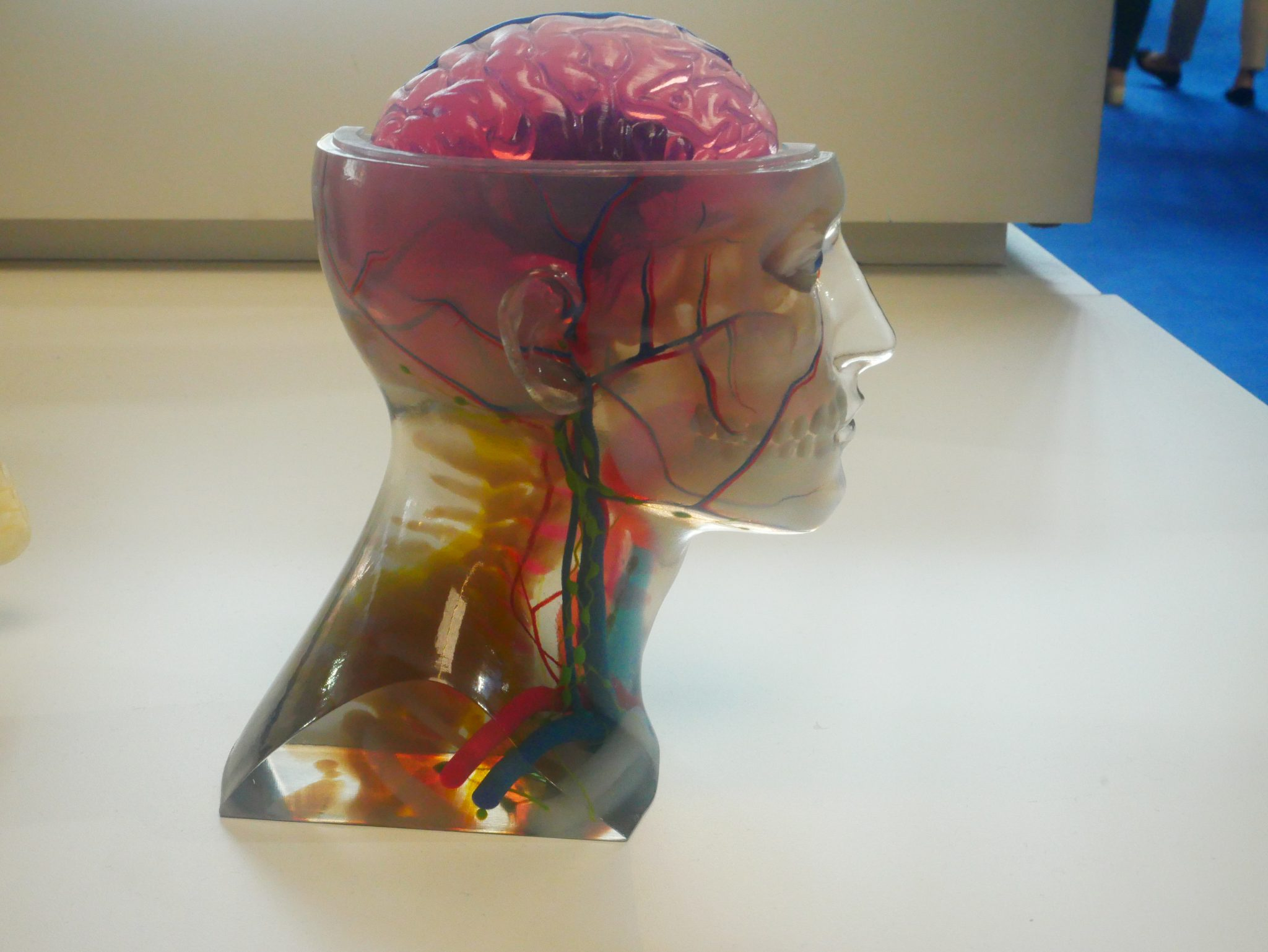 An anatomical model from Avinent printed on the Stratasys J750. Photo by Tia Vialva.
