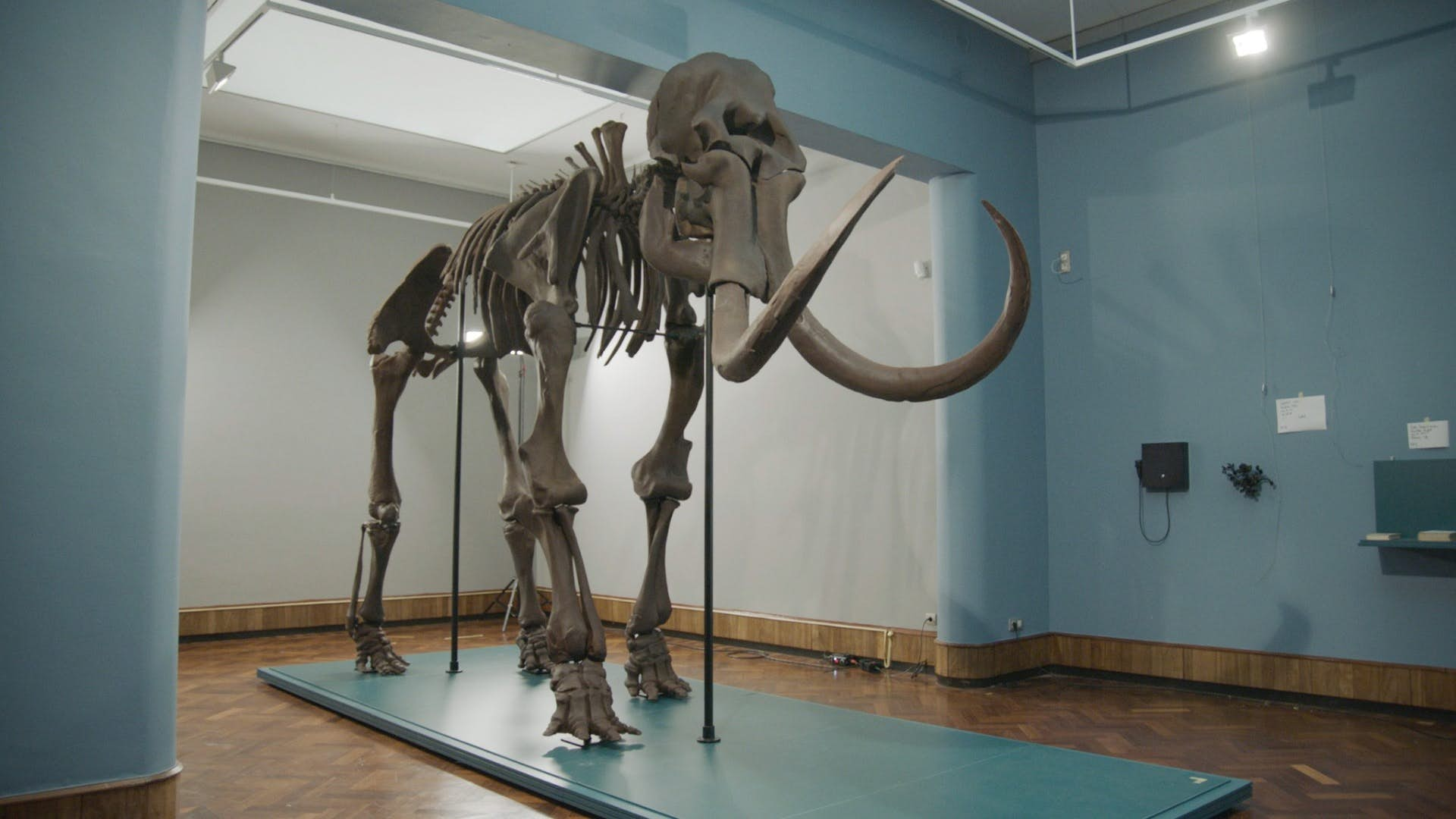 The 3D printed replica of the Lier Mammoth. Image via Materialise.