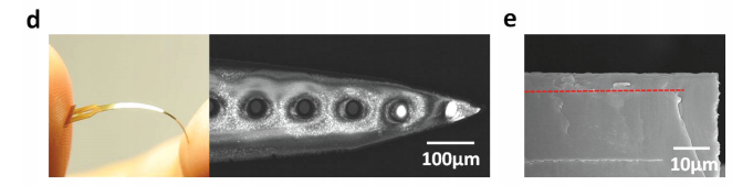d) An overview and SEM images of the flexible OPMSC-coated polyimide (PI) probe (length = 1.48 cm). e) SEM image showing a cross-sectional view of OPMSC-coated probe after washing with water. Image via ZJU/NCU.