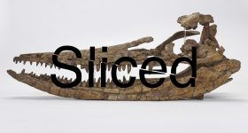 Sliced logo over an ichthyosaur skull. Original photo via Birmingham Museums Trust