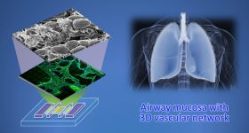 A depiction of the 3D printed airway-on-chip. Image via Ju Young Park/ Seoul National University.