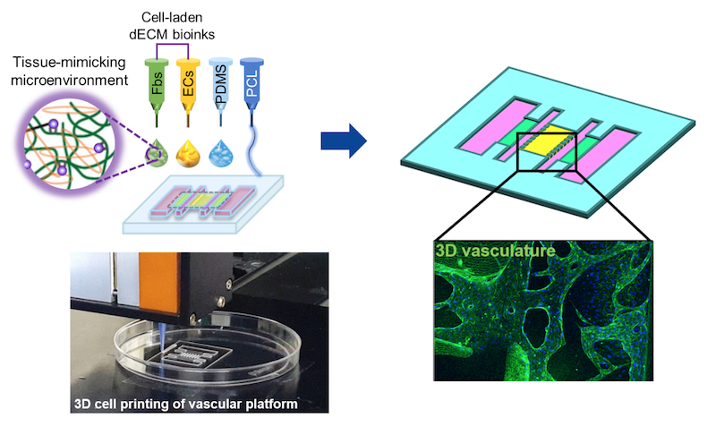 Fabrication of a vascular platform using the 3D printed airway-on-chip. Image via Ju Young Park/ Seoul National University.