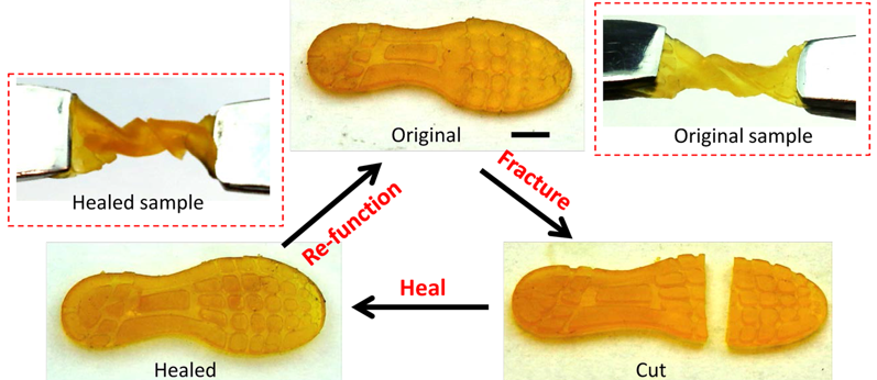 Self-healing of a shoe pad sample. Once cut, the shoe pad is brought into contact to heal for 2h at 60°C. Image via NPG Asia Materials.
