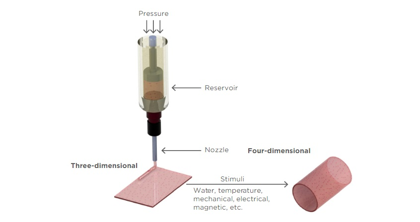 Illustrative representation of the transformation from 3D to 4D bioprinting, which can be triggered by different types of stimuli. Image via CRSPD.