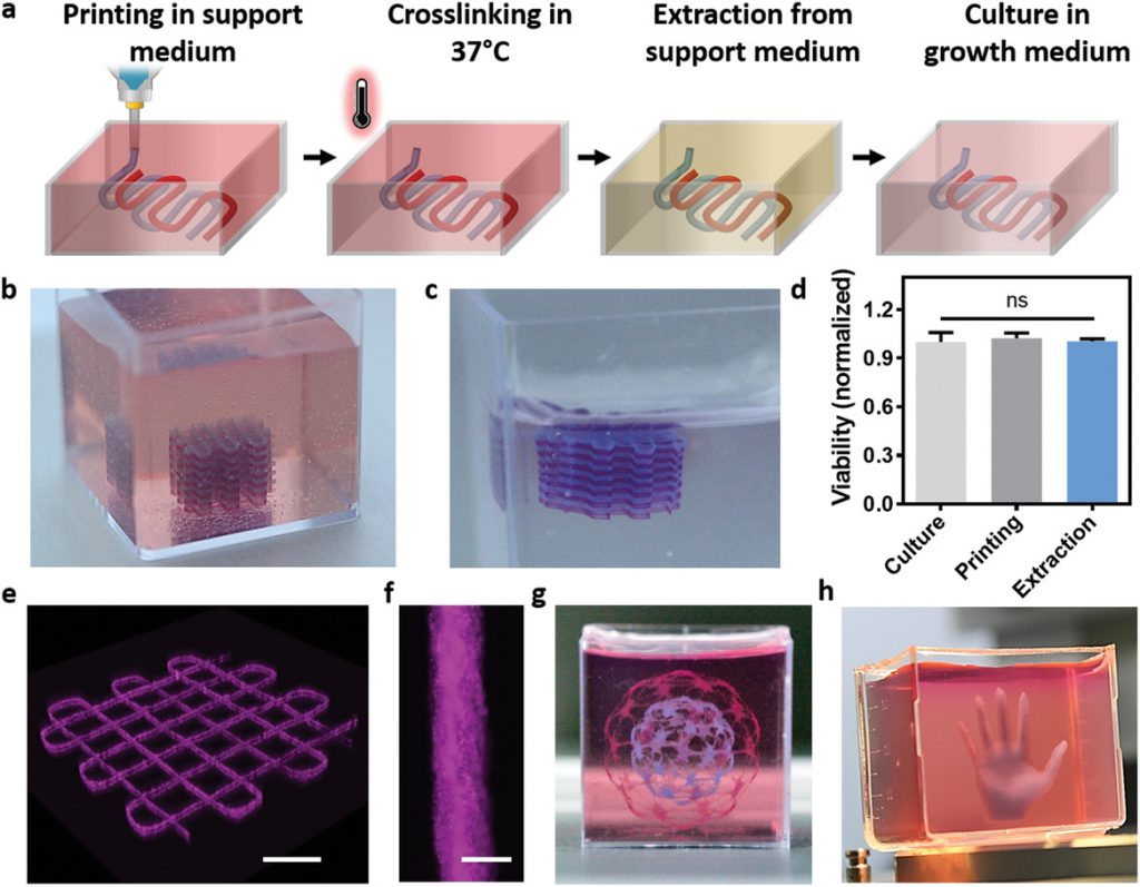 TAU's volumetric 3D bioprinting process and other sample structures fabricated with the technique. Image via Advanced Science