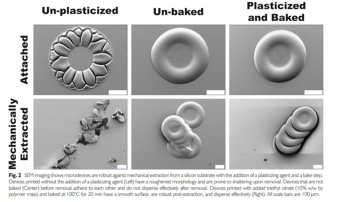 Micro-devices for oral drug delivery. Image via Springer.