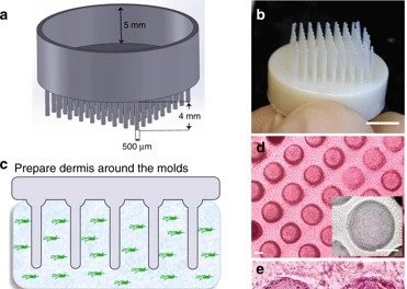 The 3D printed hair follicle mold. Image via Nature Communications.