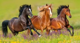 Wild horses. Photo via Shutterstock.