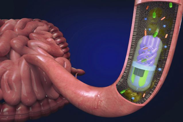 Digital rendering of microbiome sampling pill in the small intestine. Image via Nano Lab, Tufts University