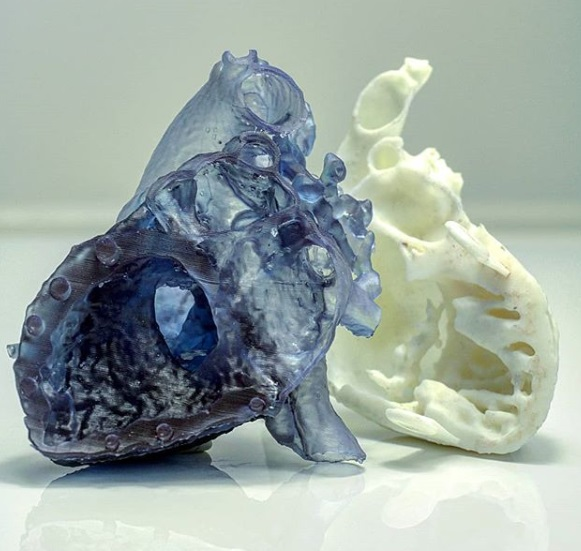 3D printed heart models. Photo via Axial3D.