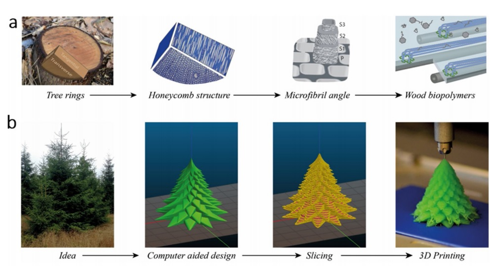 Hierarchical structure of wood from the ring structure to the wood biopolymers (cellulose, hemicellulose and lignin) present in the cell wall. (b) 3D printing process from idea to printed object by computer aided design and slicing into layers for computer aided manufacturing. Image via Chalmers University of Technology.