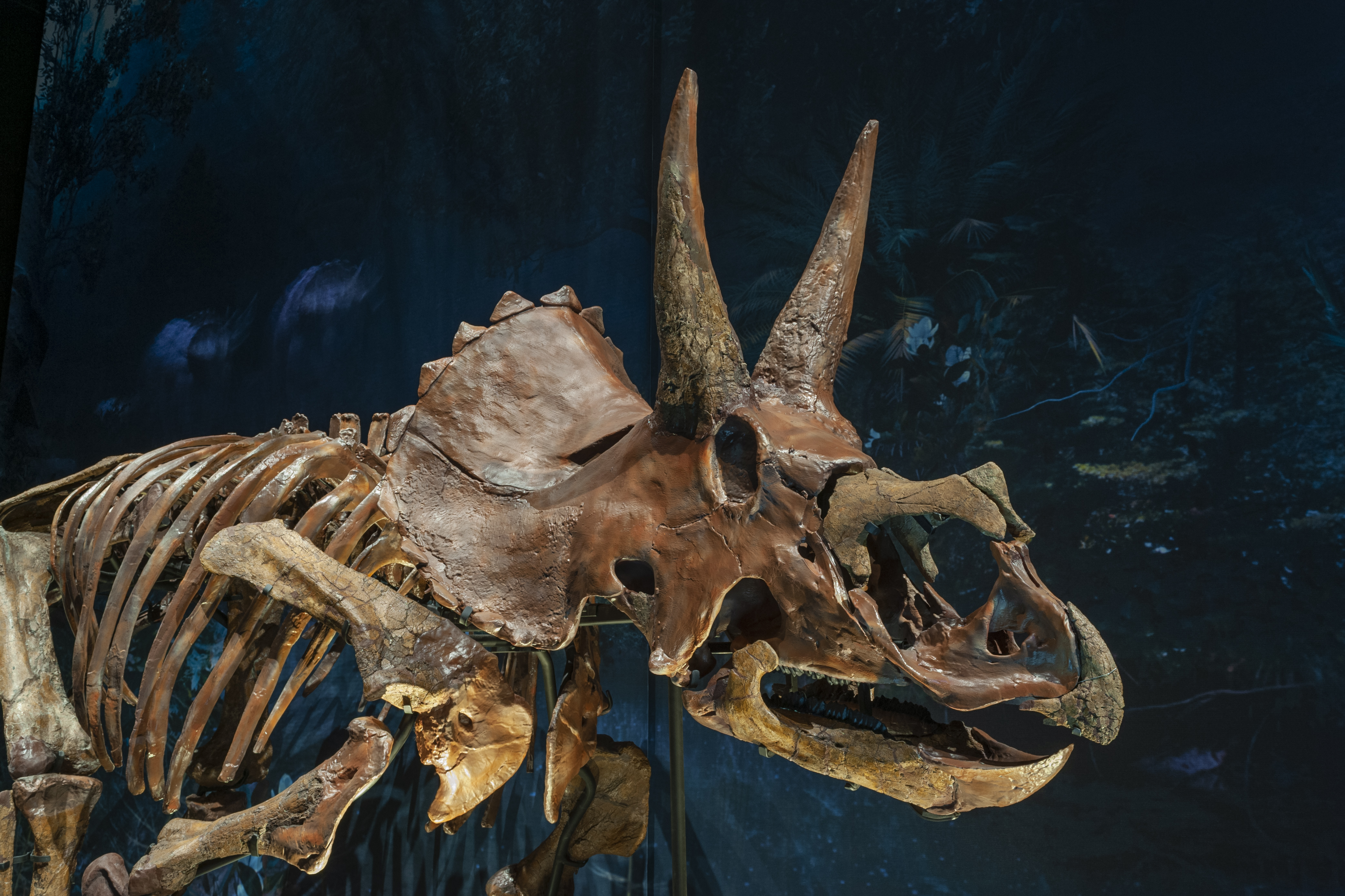 A close-up of Dirk's skull, featuring 3D printed parts. Photo via Naturalis.