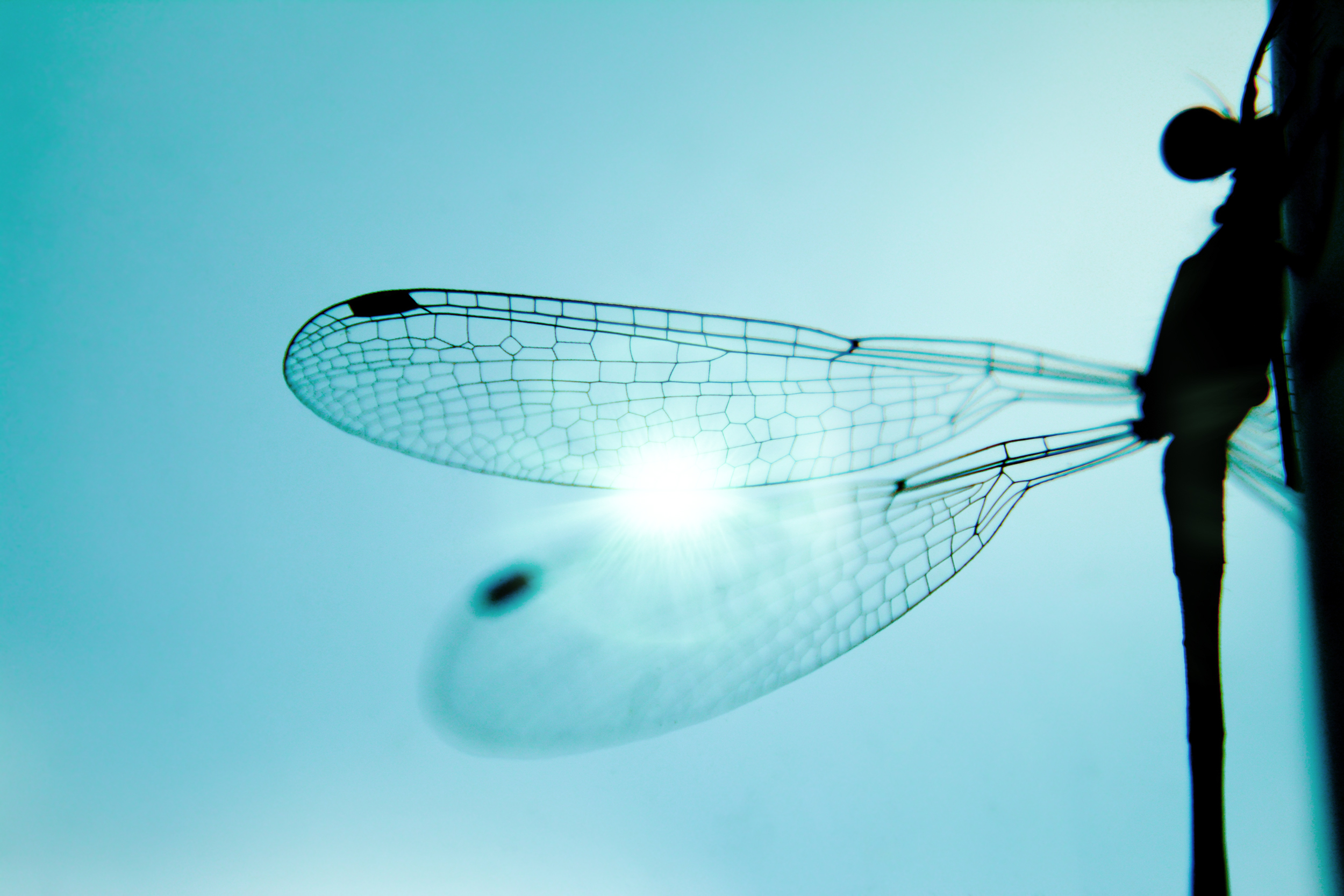 Lattice structures found in a dragonfly's wings. Photo via Shutterstock.