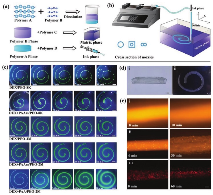 Chinese researchers develop all-aqueous 3D bioprinting method for regenerative medicine
