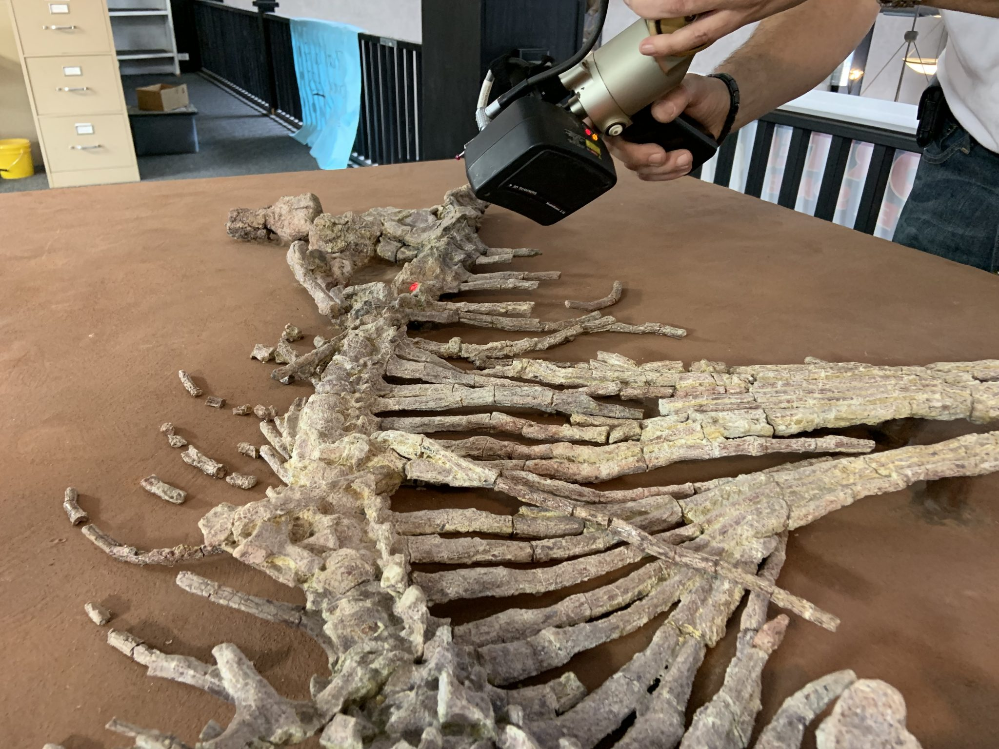 NVison's non-contact HandHeld scanner is ideal for capturing the geometry of fragile objects, such as the nearly 300-million-year-old Dimetrodon skeleton. Photo via NVision.