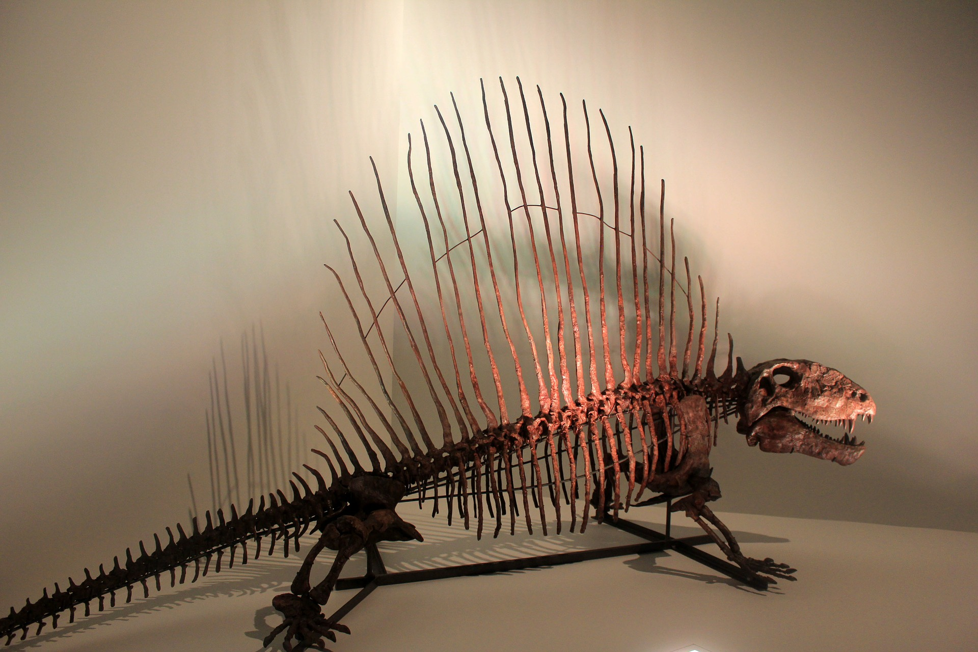 Dimetrodon skeleton. Image via Yinan Chen on Pixabay.