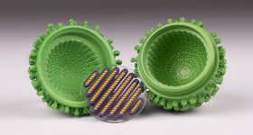 A 3D printed influenza virus model in an opened position. The clear disk that contains the eight purple capsids and the eight yellow RNA strands has been removed from the green envelope. Photo via Mimaki USA.
