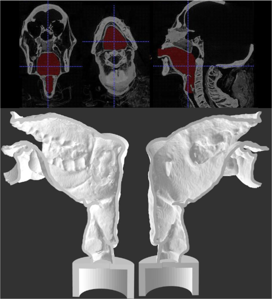 Final segmentation view (upper) and sagittal section of the two halves of Nesyamun's vocal tract (lower). The lack of tongue muscular bulk and soft palate is clear. The 3d printed replication is below. Image via Photo via Leeds Teaching Hospitals/Leeds Museums and Galleries.