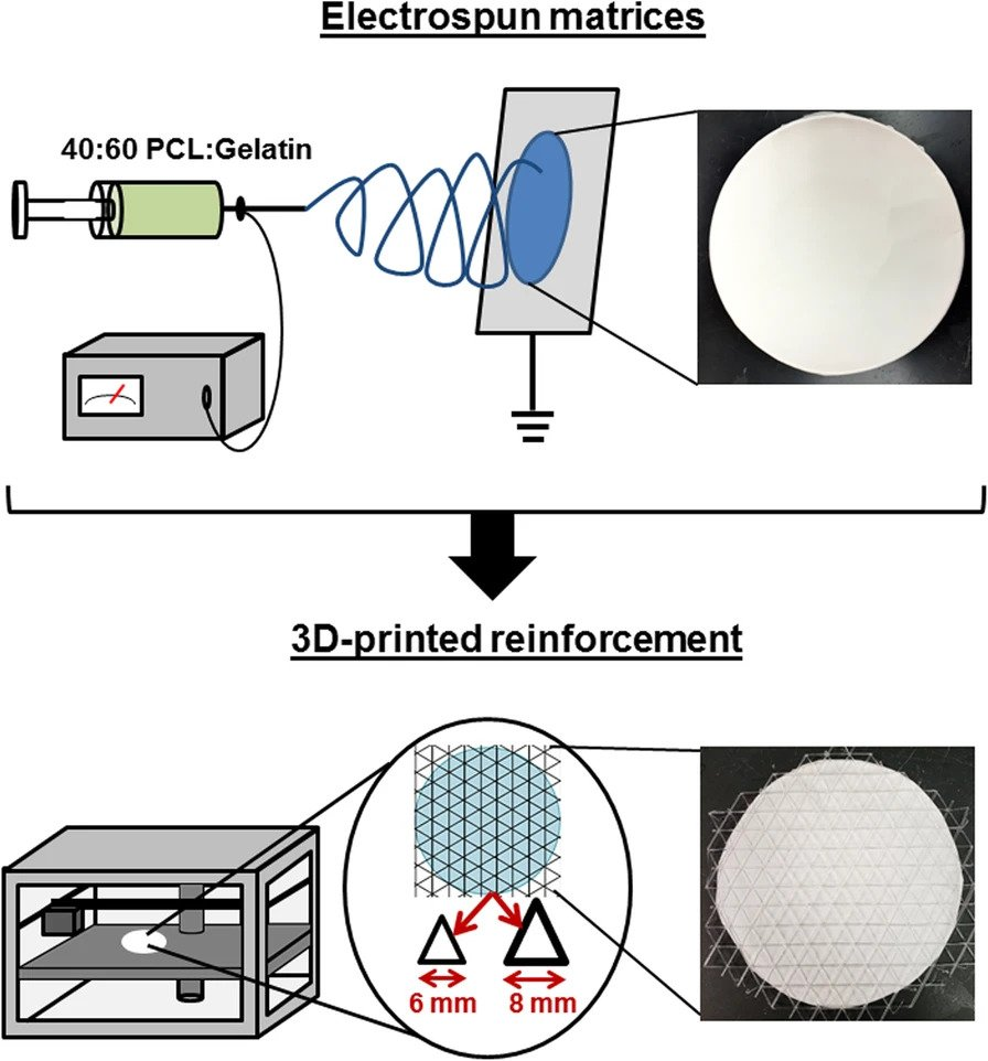 Fabrication of reinforced electrospun scaffolds. Image via Biomaterials Research.