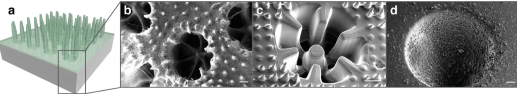 3D rendering of the coral and SEM imaging of the microscopic structure. Image via University of Cambridge.