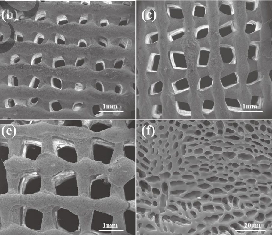 The porous structure of the implant. Images via Tsinghua University.