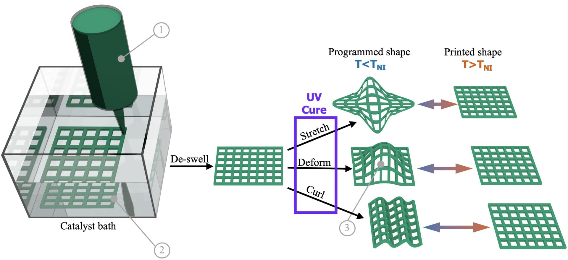 A graphic shows the process by which a Rice University lab uses 3D printing to make shapeshifting materials. Photo via Verduzco Laboratory.
