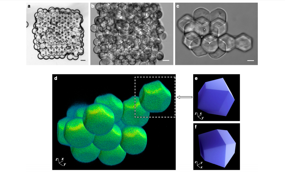 Bright-field microscopy images of a 3D printed droplet network. Image via Nature Communications.